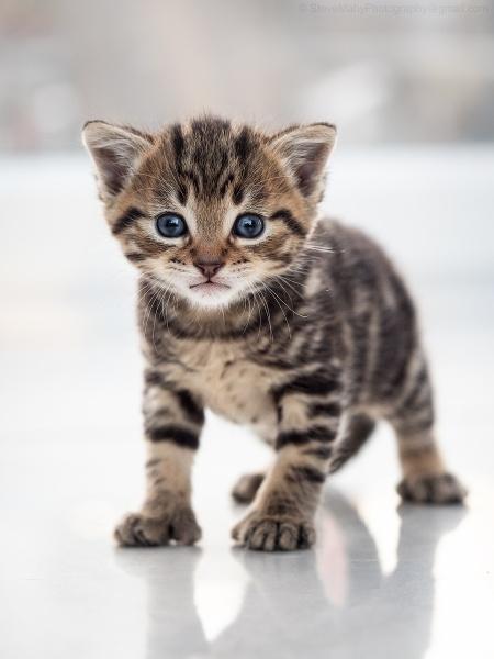 Kitten by SWMahy