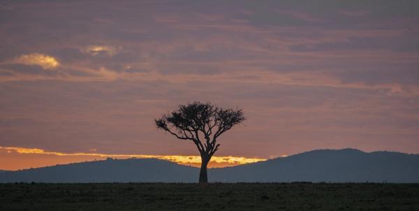 Accacia dawn by rontear