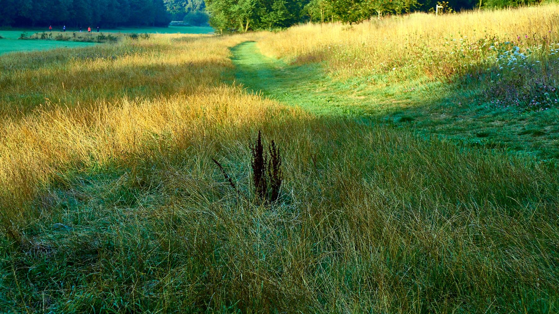 Sunlit meadow?