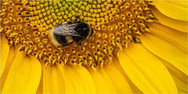 Gathering Pollen by Dixxipix