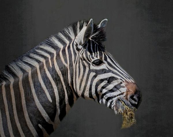 Stripes by sweetpea62