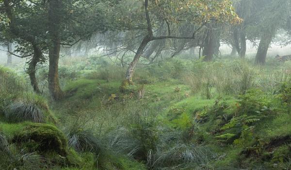 Morning Woodland by JelFish