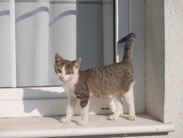 pussycat by elousteve