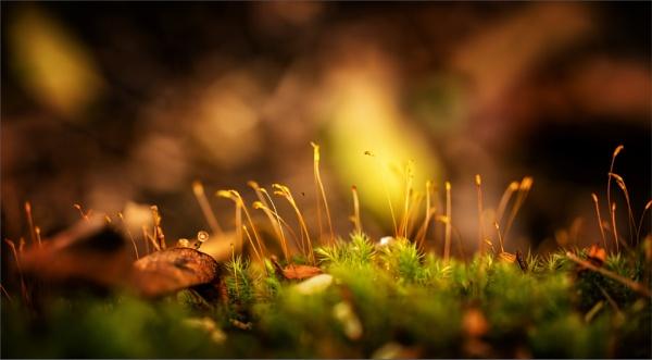 Moss On A Rock by tvhoward950