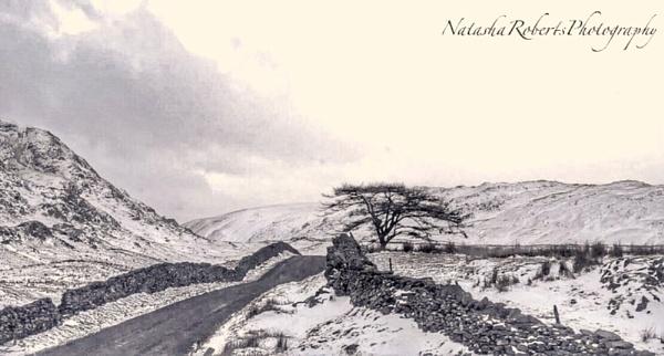 A wintery struggle by Natz88895
