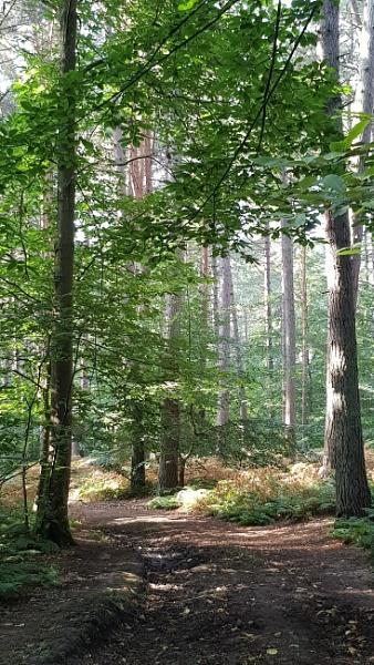 Woods by GwB
