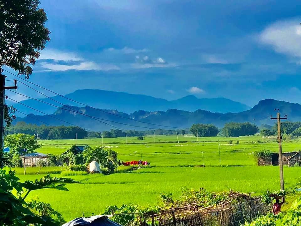 Rice field on lap of Churya hill Nepal.