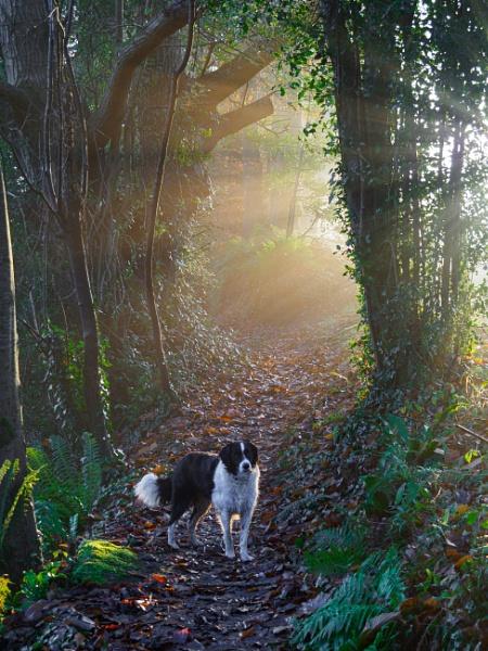 Dawn Walk by JohnDyer