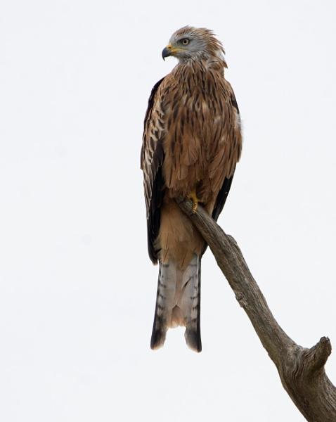 Big Bird on a stick! by LinH