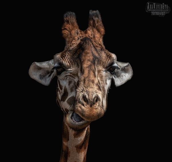 The Giraffe by MartinWait