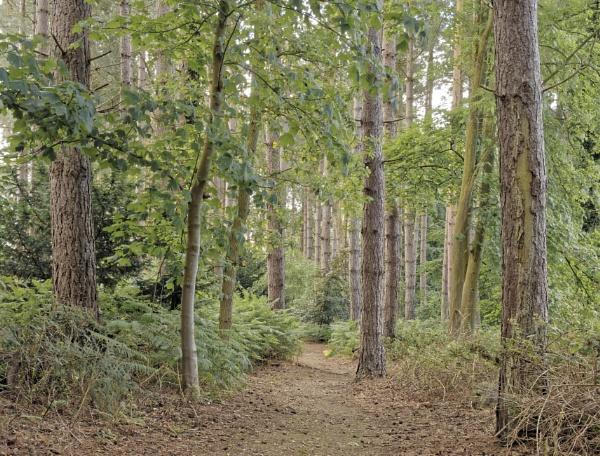 Taverham Nature Reserve by pdunstan_Greymoon