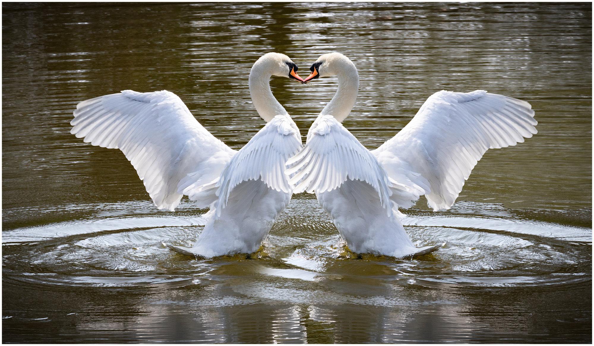 Swanipulation