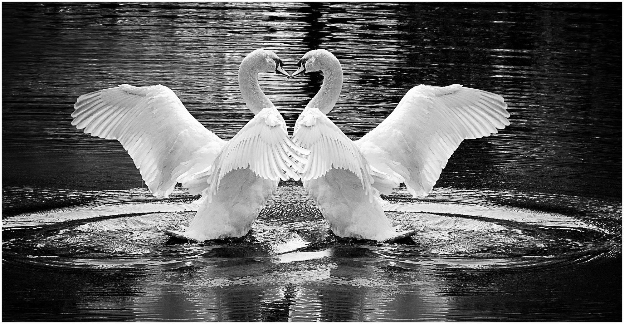 Swanipulation 2