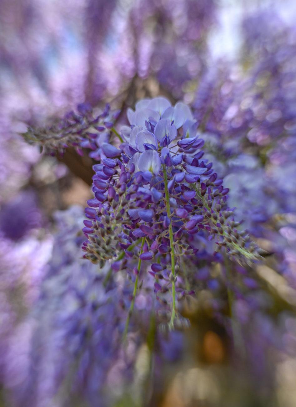 50 shades of lilac