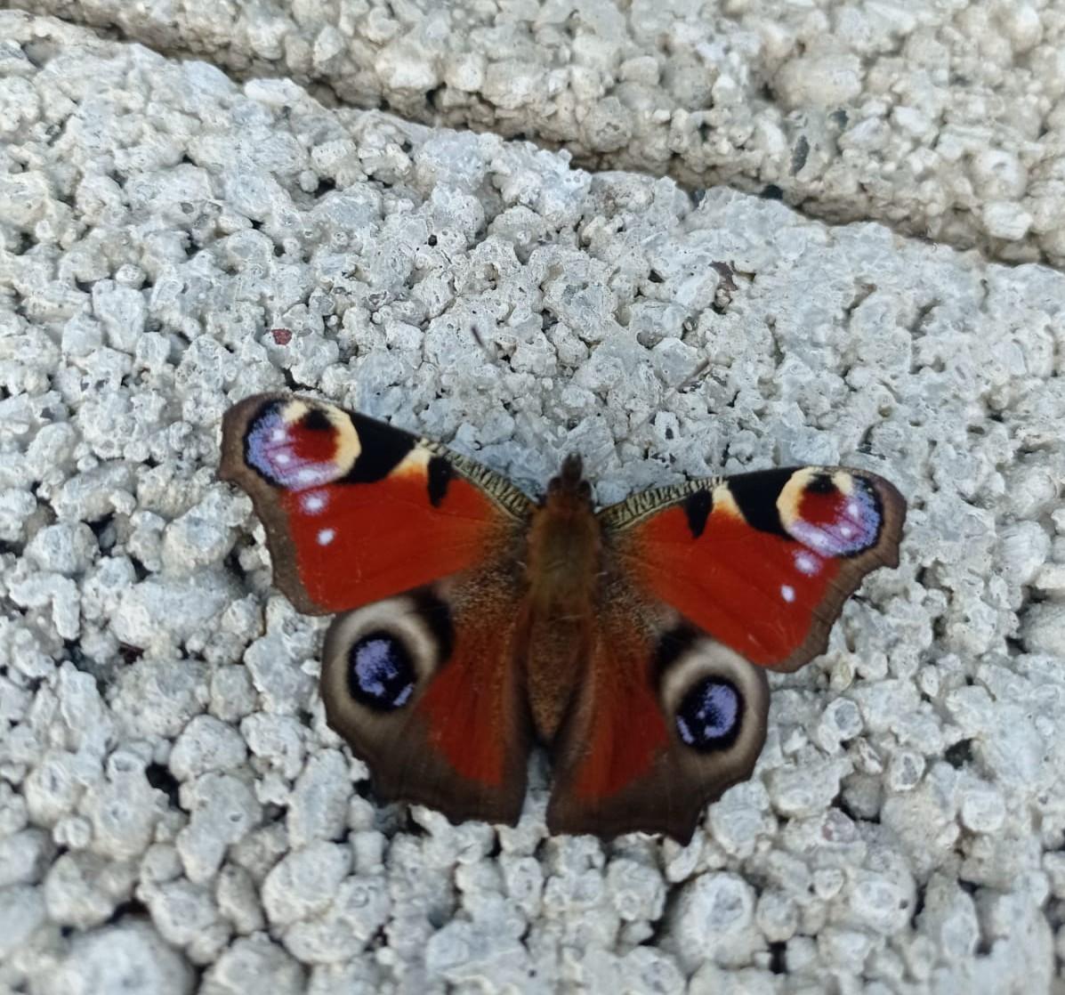 It's a Butterfly