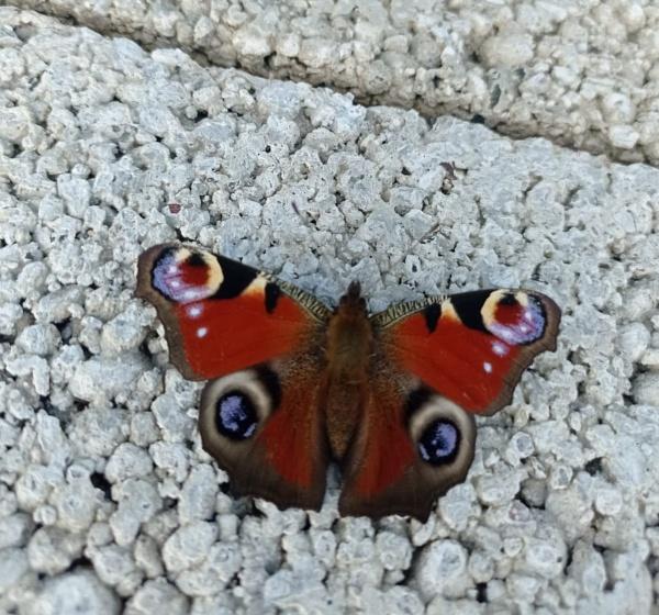 It\'s a Butterfly by carol01
