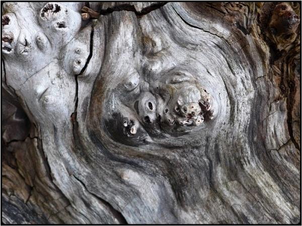 the plague-tree by FabioKeiner