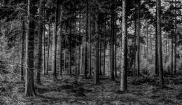 Hempstead Forest Kent