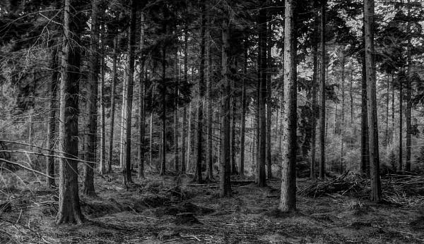 Hempstead Forest Kent by af1