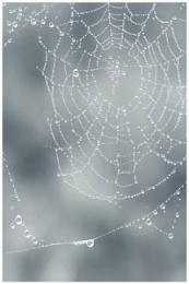 Web II