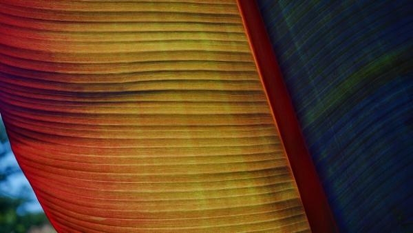 Palm Leaf by victorburnside