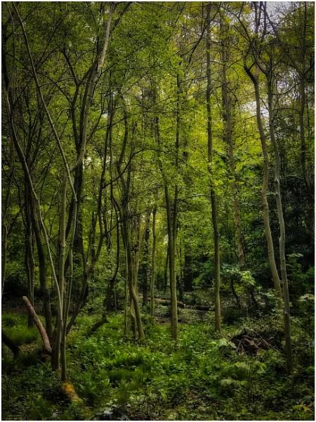Trees by sueriley