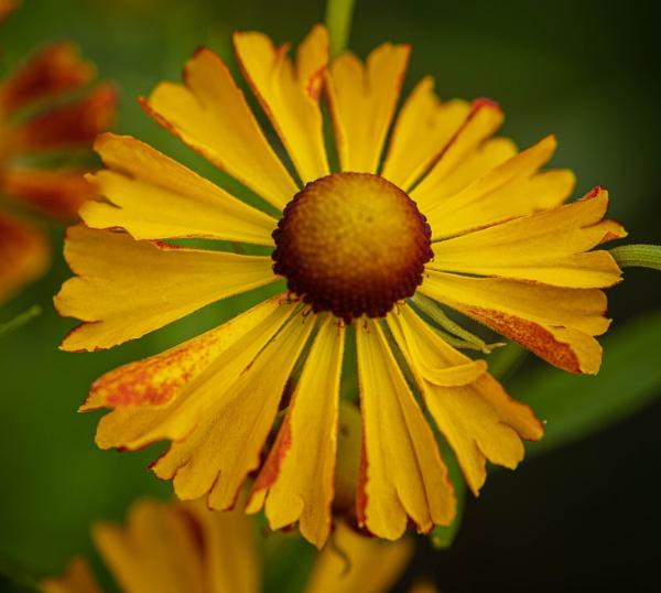 Garden Flower by RonDM