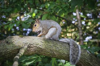 """""""Saturday Squirrel""""."""