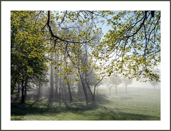 Misty Mood by kw