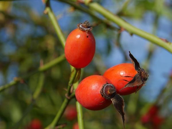 autumn vitamins by elousteve