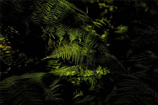 Ferns by tvhoward950