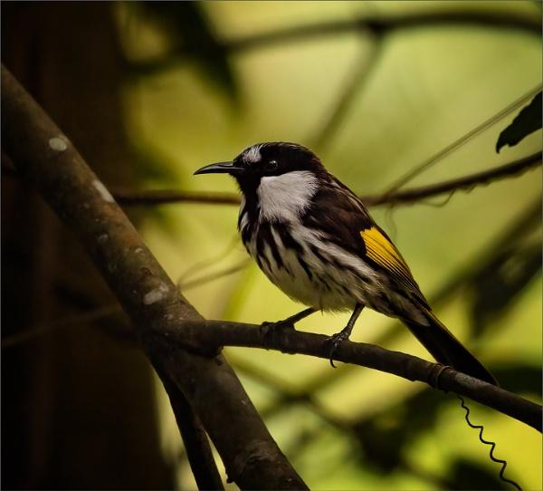 Unidentified Beautiful Small Bird by tvhoward950