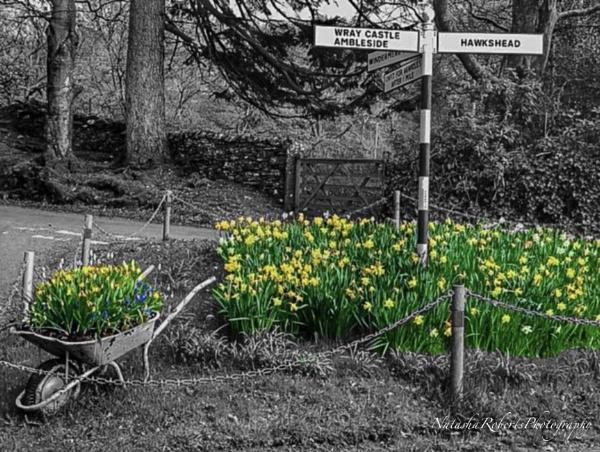 Spring Spot colouring by Natz88895