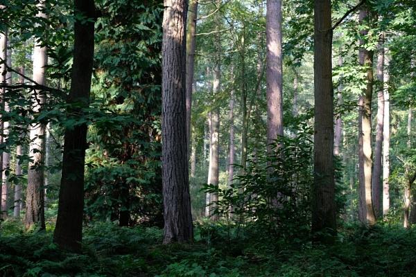 Norfolk woodland by GwB