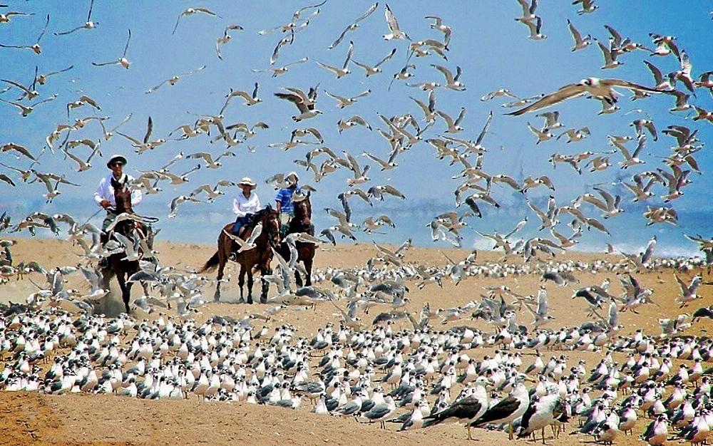 A Few Birds