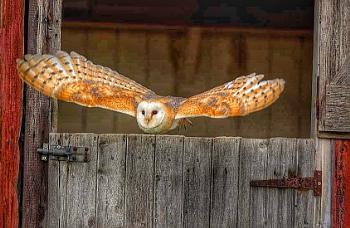 Barn and Owl