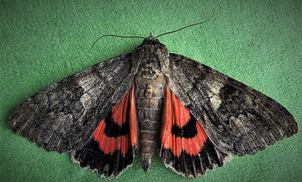 Moth by rosej