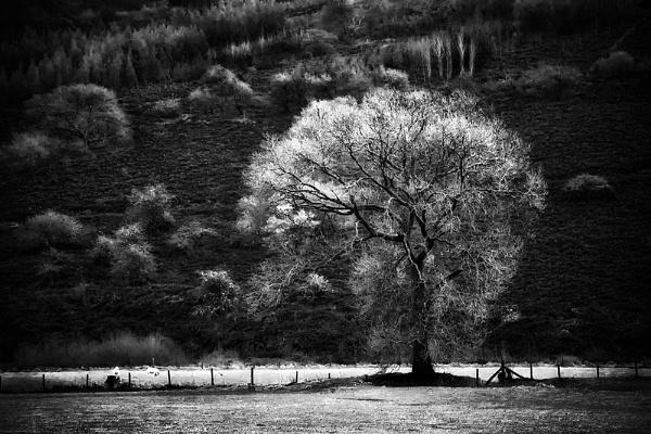 The Magic Tree by Buffalo_Tom