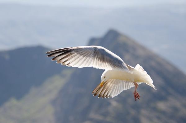 Gull by stevedsmith