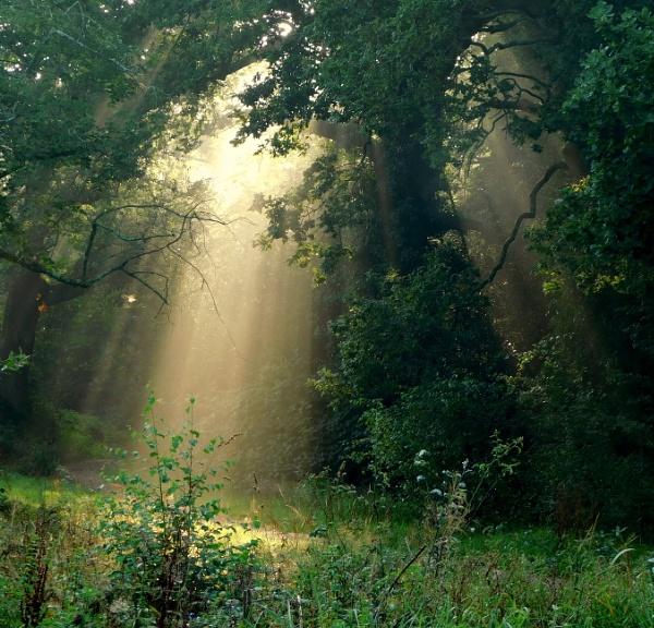 Light pushing through by SUE118