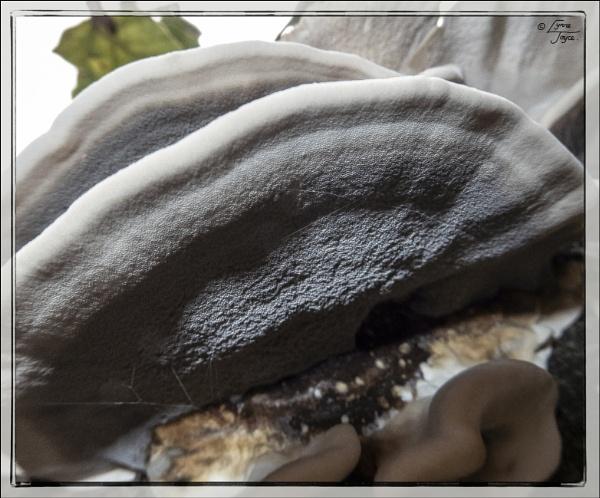 More Fungi by LynneJoyce