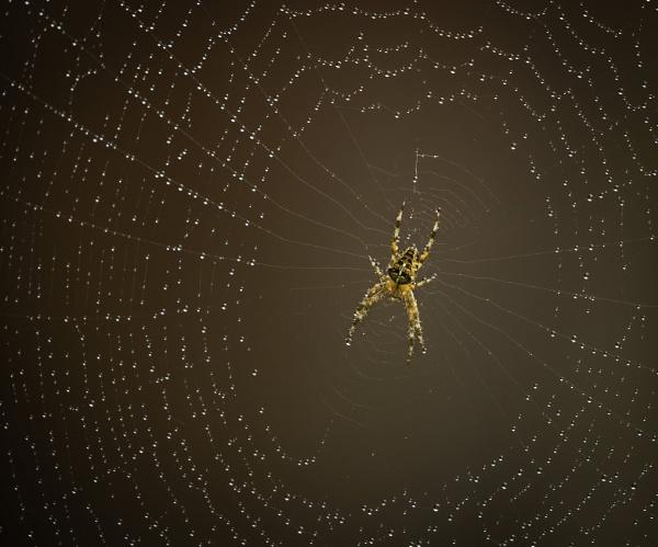 Arachnid trap by esoxlucius