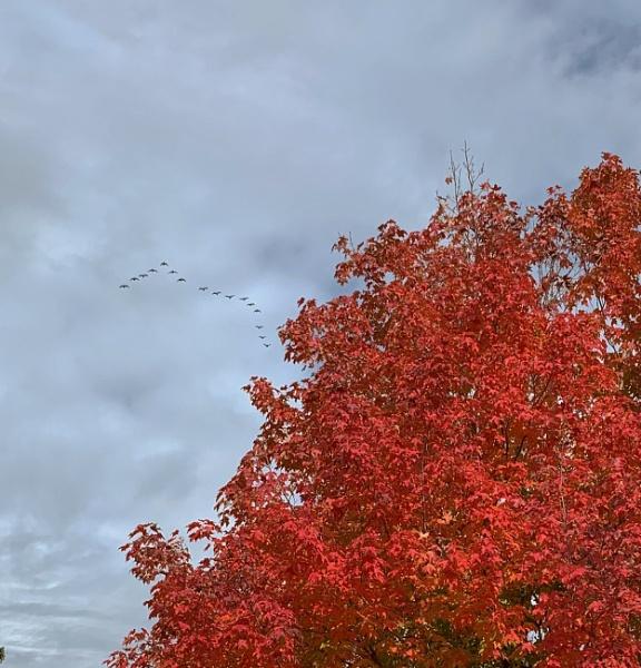 Fall 2021 in Alberta by sjelect