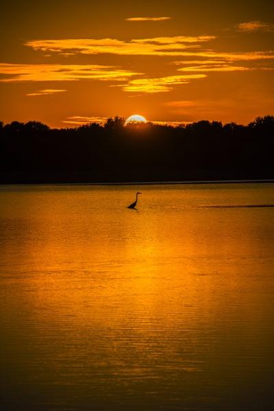 Lone egret by jbsaladino