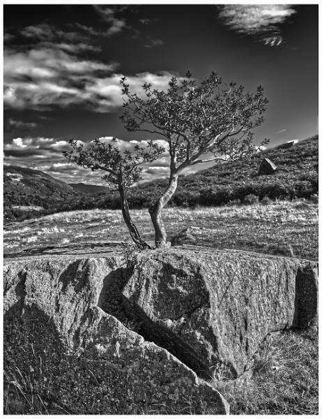 Rock \'n Tree by gpimages