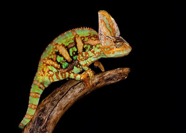 Chameleon by BydoR9