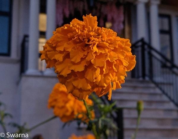 Flower at Night... by Swarnadip