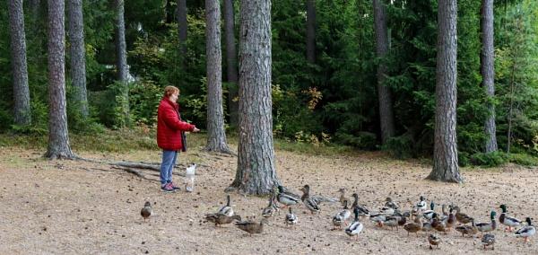 Feeding the Birds. by Jukka