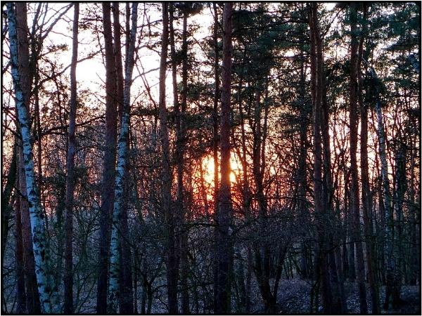 winter sun by FabioKeiner
