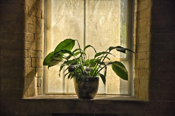 Window in Salt\'s Mill by iangilmour